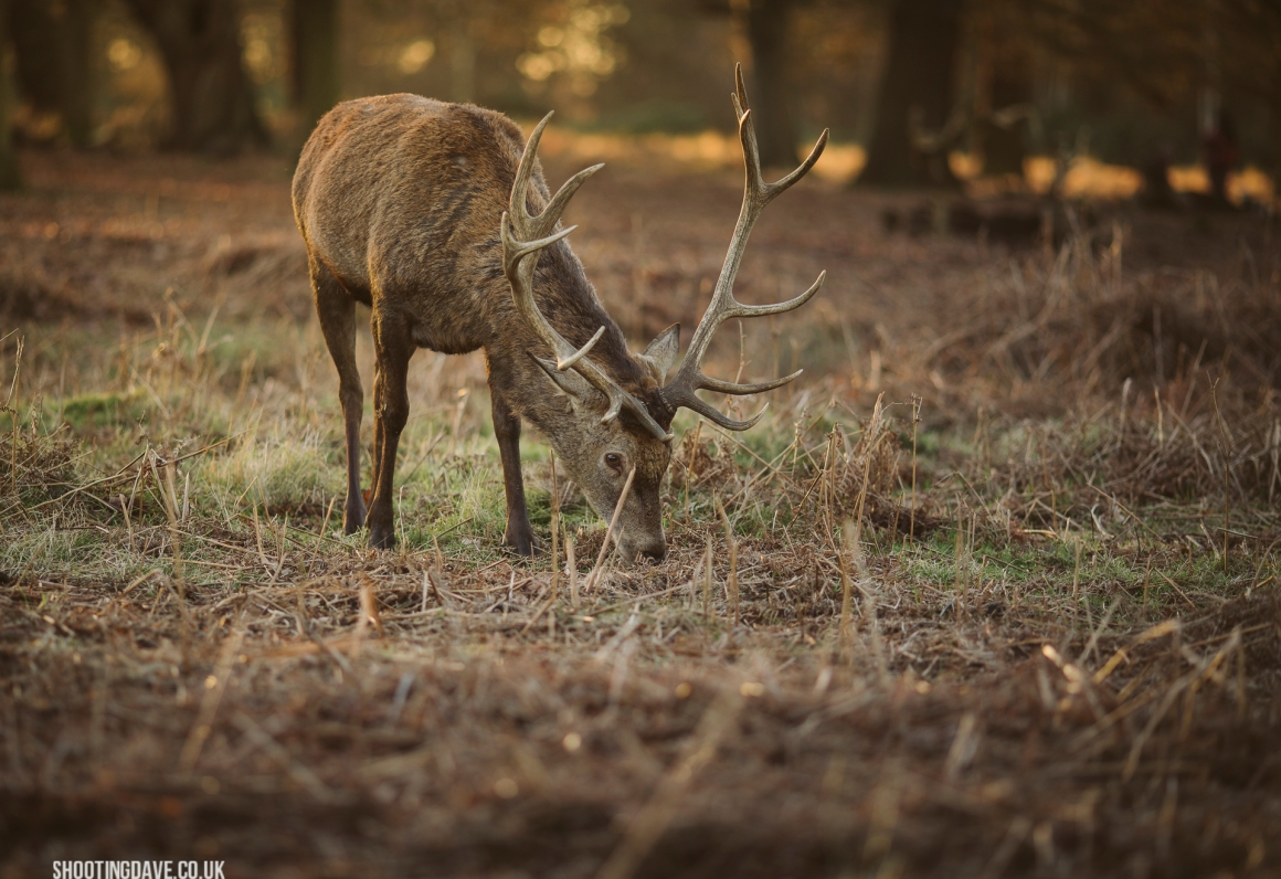richmond_park_006