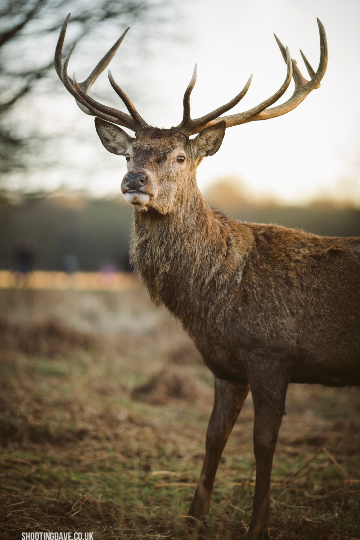 richmond_park_011